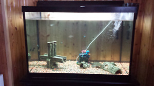 65 gallon fish tank