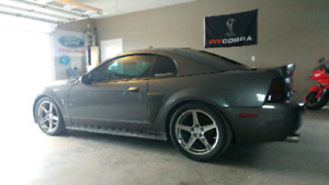 2003 Ford Svt Cobra Terminator Coupe
