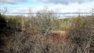 FANTASTIC 47 ACRE PARCEL ON THE EDGE OF TOWN Kitchener / Waterloo Kitchener Area image 3