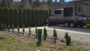 RV Lot For Sale, Shuswap Lake. $65,000