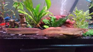 Loaches, and crayfish