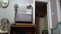 selling a small dog cage