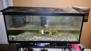 75 gallon fish tank,  with lots of accessories