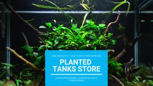 Beautiful Low Light Beginner Aquatic Plants!