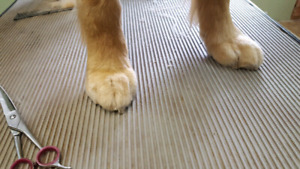 Toe Nail Trimming.  dogs cats rabbits etc