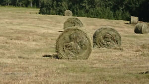Nice green hay for sale put up dry no rain