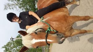 15 Year Old Haflinger Mare For Free Lease