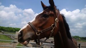 Pretty, Well Started 2013 Thoroughbred Prospect