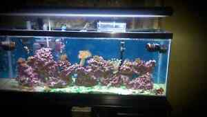 55 gallon saltwater tank and cabinet