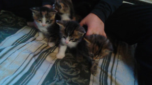 Nice little kittens ready for new home