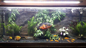 Aquarium 55gallons lumiere del fluval