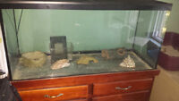 Aquarium and stand for sale. With heat lamp and everything else