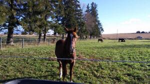 Horse/pony Boarding