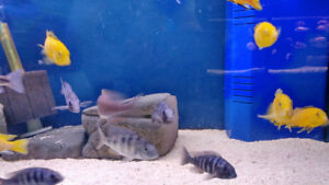 Fish Tank Cleaning. Aquarium Maintenance.