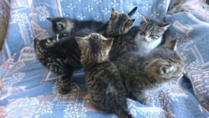 Cute kittens to rehome