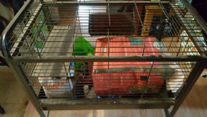Gineau pig/ rabbit cage