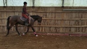 4 horseback riding lessonswith certified coach $135 indoor arena