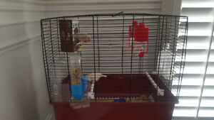 2 Zebra Finches with cage to a good home