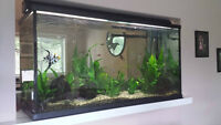 90gal Aquarium with Fish, Plants and All Equipment