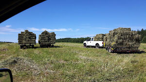 square bales of this years hay.