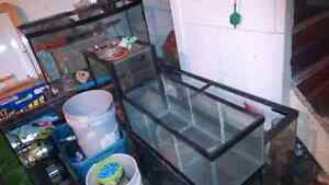 Fish Tanks and Much More