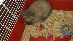 Fluffy rabbit with cage calls 818-2247