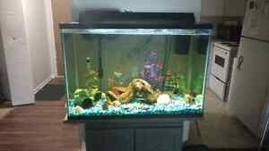 65 gallon  fish tank with everything!
