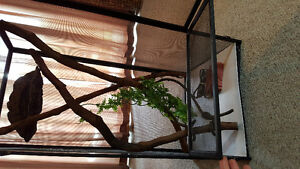 Reptile home and accesories