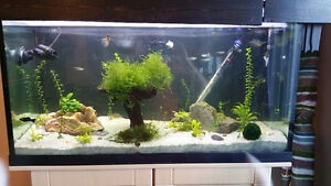 46 Gallon freshwater tank with plants, fish, and all accessories