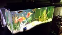 fish tank with complete setup an fish