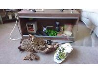 3ft reptile vivarium and full set up