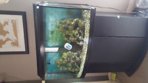 40 gallon fish tank with heating, filtration, oxygen system