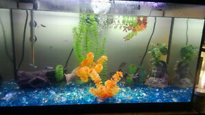 Looking for new blood for my guppie and molly tanks (FREE)
