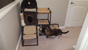 Bailey and Bella Cat Structure