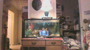 fish tank with everything....