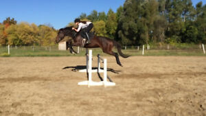Horseback Riding Lessons and Parties