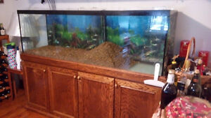 125 gal. aquarium, cabinet w/canopy, marine light - one owner -