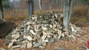 next season or early spring firewood for sale Kingston Kingston Area image 2