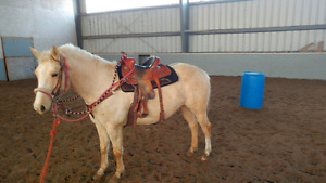 6 year old palamino mare......started under saddle