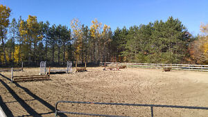 Horse Boarding and Training available near Newmarket