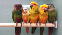 NEW ARRIVAL ****EXOTIC PETS *FALL SALE!!!*** BIRDS & REPTILES
