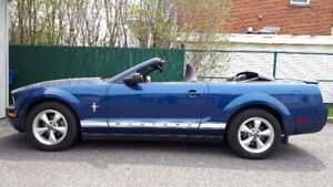 Mustang Pony Pack