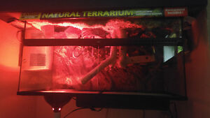 Exo terra large terrarium with lamp and spot nose ball python