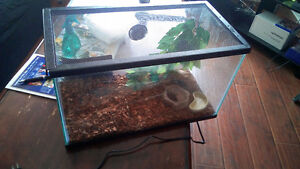 Anole and terrarium for sale with some supplies $60
