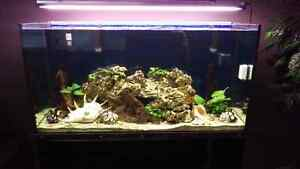Fish tank reef ready with sump&new pump