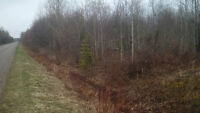 Treed 5 Acre Building Parcel in Pineview