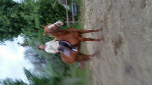 Wanted exp. English riders to help ride well trained horses