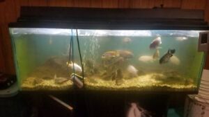 75 Gallon Fish Tank With fish and accessories GREAT DEAL!