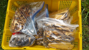 Wild harvested dried polypore mushrooms