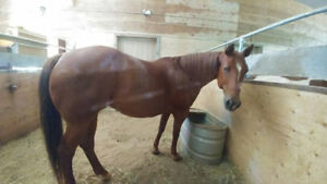 Free Horse Boarding In Exchange For Farm Work